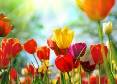 March Garden Inspiration   Colour!