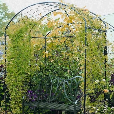 Harrogate Bower Classic Extra Arch