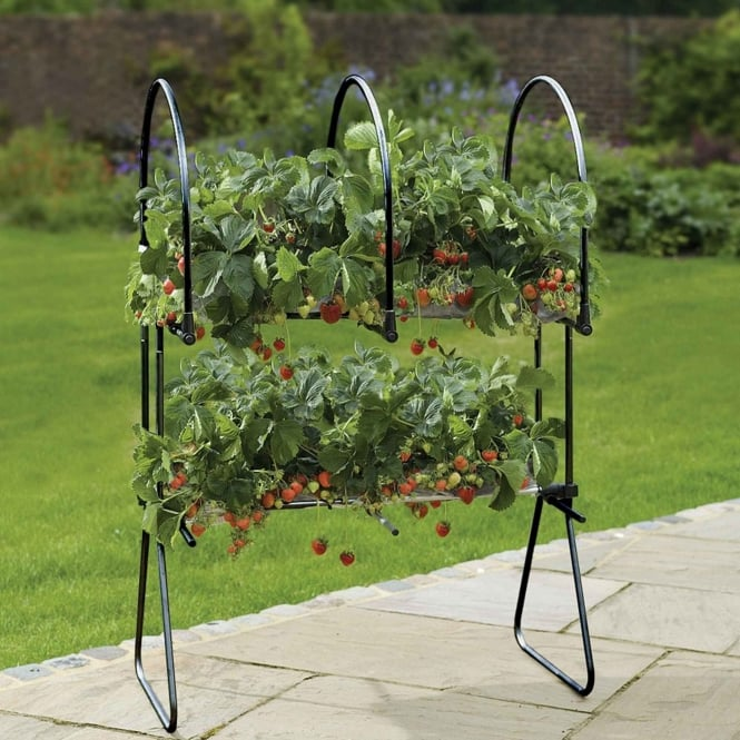 Agriframes Strawberry Table Top