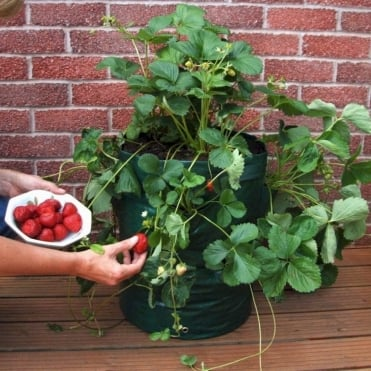 Strawberry/Herb Planter - Pack Of Two