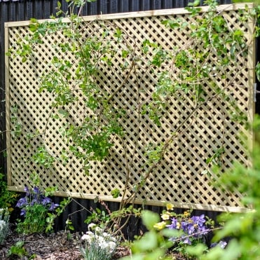Lilleshall Lattice Trellis