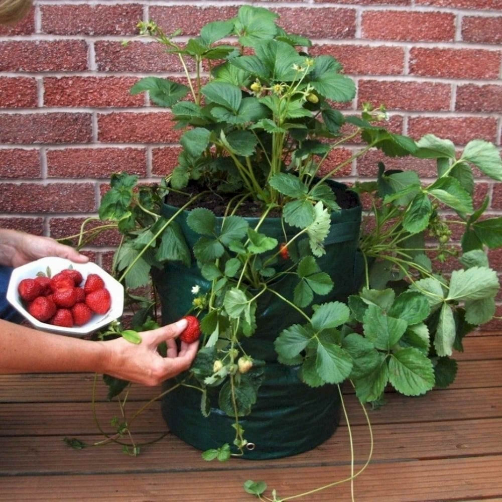 Greena Strawberry Herb Planter Pack Of Two Garden Street