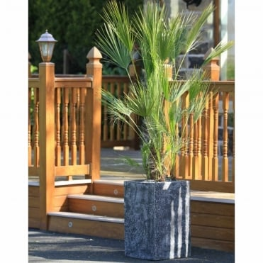 Chamaerops Tree With Granite-Look Tall Square Planter