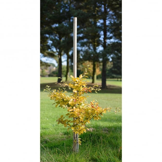 Grange Tree Pole 60mm